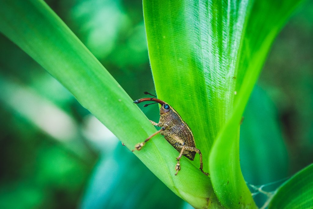 Unglaublich was für Insekten sich auf Costa Rica so rumtreiben